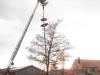 kirchweihbaum-aufstellen-ii
